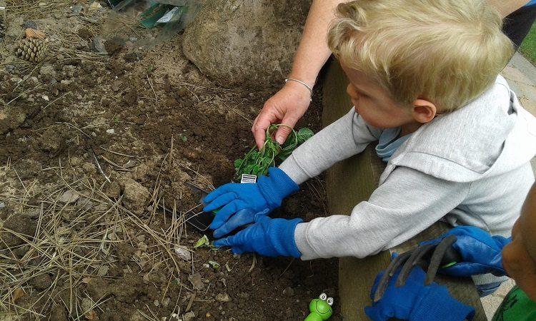 Bromsgrove – Children's Gardening Week