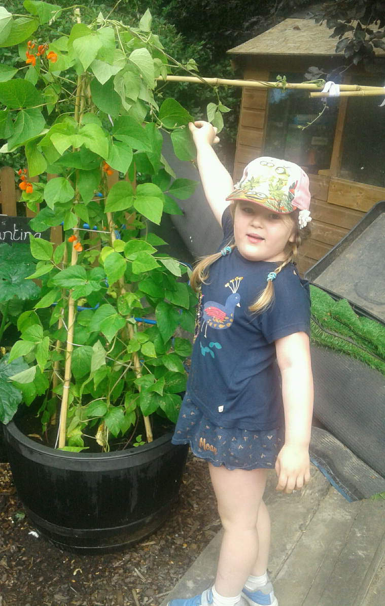 The children have been looking after the beans that they have grown themselves from seeds.