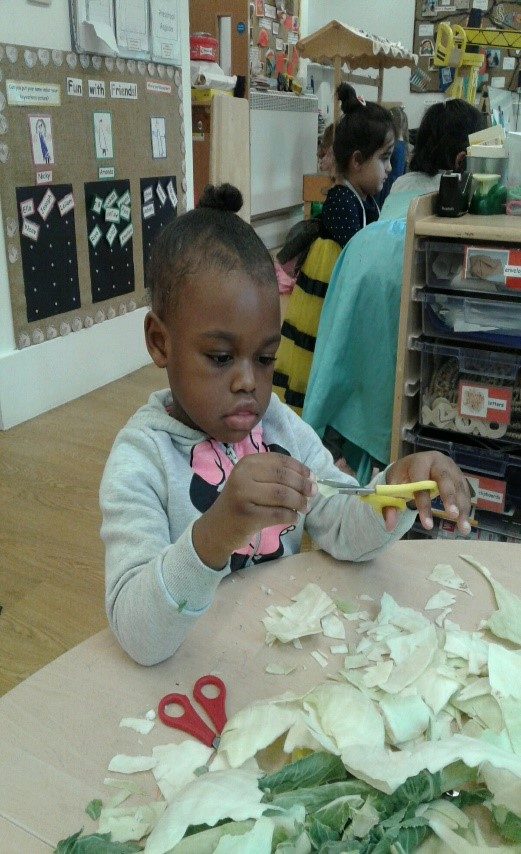 Pre-school have been practising their scissor skills, cutting up cabbage and cauliflower and making them into paintbrushes.