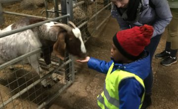 Yesterday was our Christmas trip to Umberslade farm.