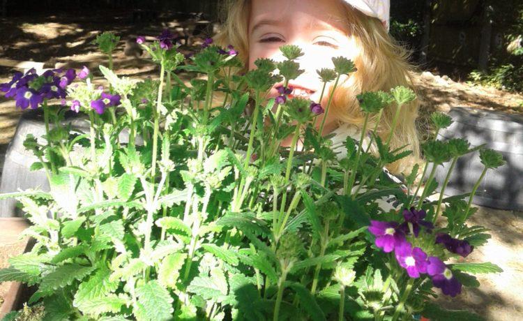 Hinckley – Planting in Our Garden