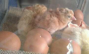 The eggs have hatched!