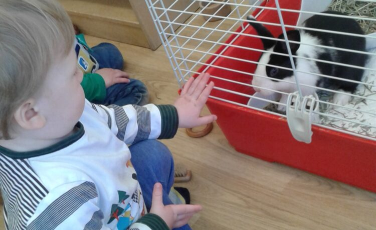 Hinckley – Meeting baby bunny Floss