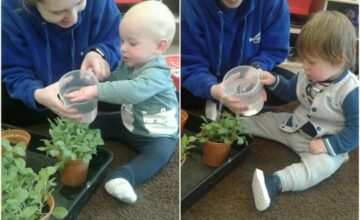 The babies have been helping to water our seedlings growing on our windowsill