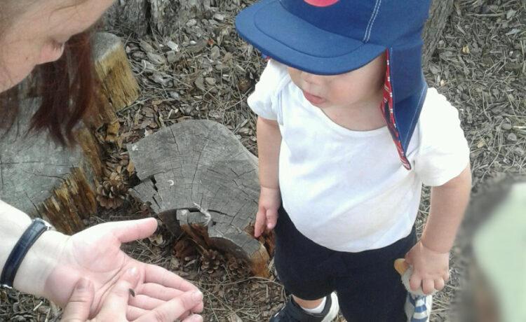 Bromsgrove – Mini beast discovery