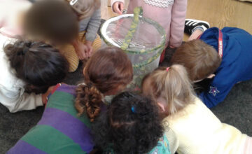 The toddlers are finding the stick insects fascinating