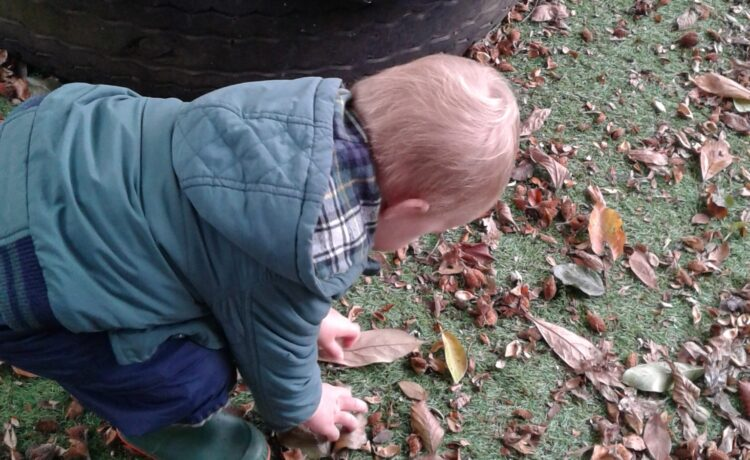 Hinckley – Join in with our leaf hunt